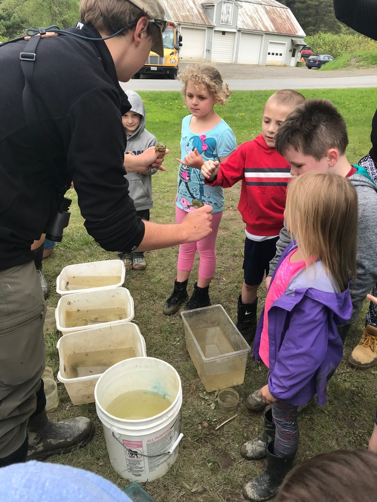 Curious students touched the frogs